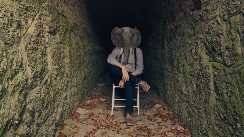 Elephants in Silent Rooms – Generations im Review